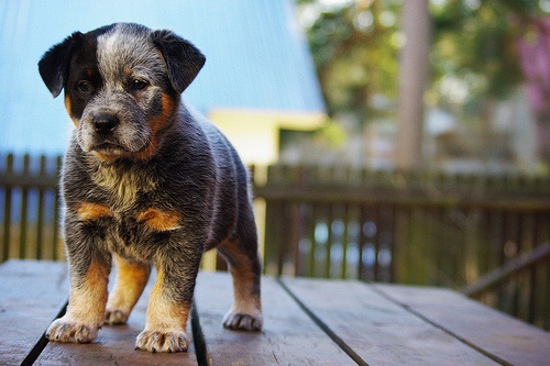 ello lil puppy id love to have you ^_^