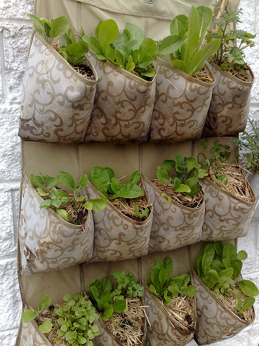 "awyeahverticalgardens:  vertical garden sept (by lyrebirdcreate (kate)) ""My rabbit proof gardens"""