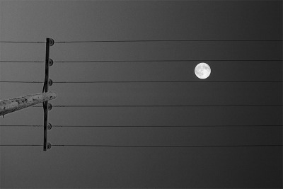 Music of the Moon