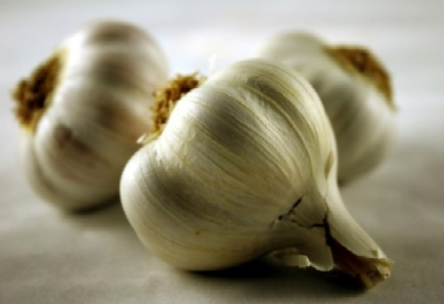 herbalhealing:  Garlic (Allium sativum) Garlic is a tremendously powerful herb that most of us have a steady access to. It is always found at the local grocery store and, with the increasing popularity of farmer's markets, heirloom varieties can often be bought locally, which results in even more medicinal qualities.  Today it is one of the most researched and most used herbs in our kitchens and herbal apothecary. It has a variety of actions, making it a great ally for a variety of health disturbances. Raw garlic can be taken liberally at the first sign of a cold or flu to ward off the illness or to lessen the symptoms. I like to do this by dipping bread in olive oil with lots of minced garlic!  Raw garlic is an emetic, so it's a good idea to approach it slowly and back off if nausea occurs. Herbalist Stephen Buhner reports in his book Herbal Antibiotics that garlic is effective against Staphyloccus aureas, Candida albicans, Escherichia coli, Streptococcus spp., Salmonella spp., herpes simplex, and more. He recommends eating the fresh juice for best results. To do this without immediately experiencing its strong emetic qualities, Buhner recommends starting with a 1⁄4 teaspoon in a glass of tomato juice and slowly working up your tolerance. For fungal infections garlic can be used externally as well as internally.  It is quite strong and could burn sensitive areas, so it can be diluted by soaking it in oil for a 1⁄2 hour to several hours, straining and then applying to the area. An old time folk remedy that works wonders for congestion associated with colds and the flu is to take this same oil, spread it on the feet, cover with a pair of old socks, and then retire to bed for the evening.