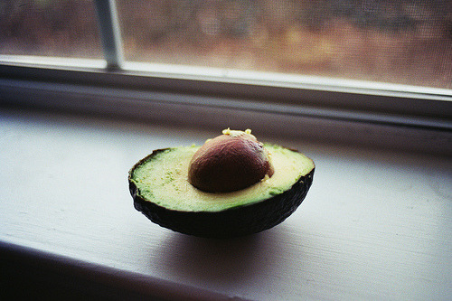 obsessed with avocados - really need some in my life right now
