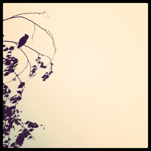 Bird. (Taken with instagram)