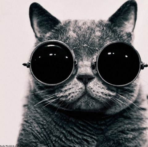"""Mind Games of Ozzy"" by Andy Prokh / This cat has some hype sunglasses"