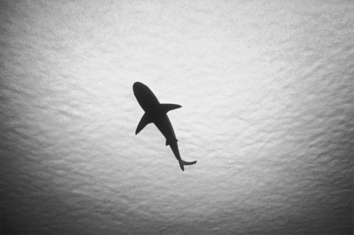 Sharks are awesome (via Discovery News)