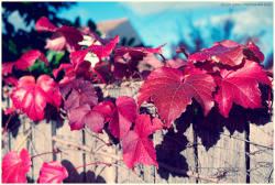 Shades of Autumn // Photography by Jocelyn Leong. ©2011.