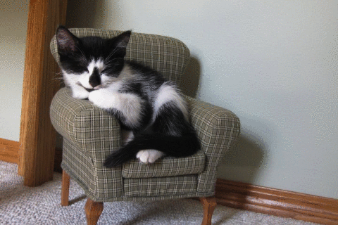 a kitty in her chair.