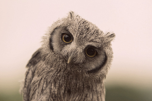 The wise old owl does not judge.