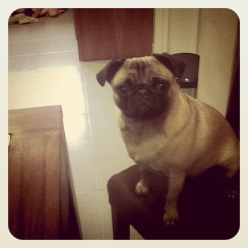 That face! #pug (Taken with instagram)