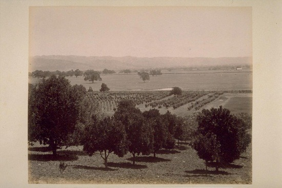 "The art: Carleton Watkins, View from Caleb Carriger Orange Orchard, One Mile South of El Verano, Looking [East] Across Sonoma Valley, ca. 1887. According to the Online Archive of California, the Sonoma Valley Improvement Country hired Watkins to photograph the countryside and estates of the Sonoma Valley as a promotional tool. Best known for his dramatic mountain landscapes, Watkins' pictures often showed the ways in which the federal government enabled or promoted new agricultural products in California.  The news: ""How Uncle Sam Helped Define America's Diet,"" by Renee Montagne on NPR's ""Morning Edition."" The source: Collection of The Bancroft Library, University of California, Berkeley, via Calisphere."