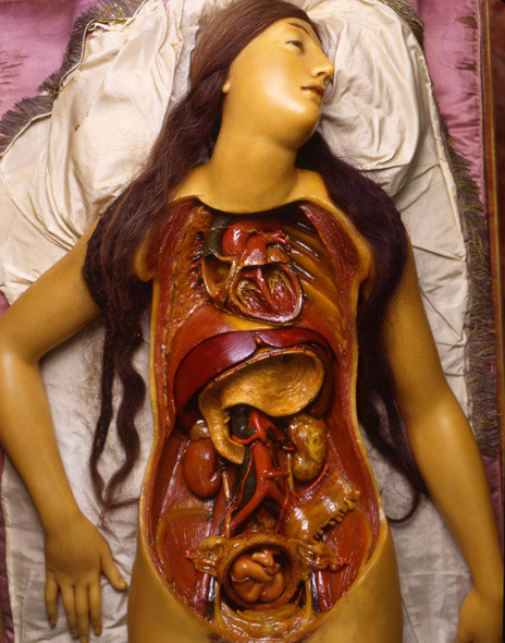 "promemorie:  The ""Medical Venus"" discomposed and showing a          fetus in the uterus - note the fetus is fully formed and not embryonic (Specola Collection, University of Florence) via: Museo di Storia naturale di Firenze"