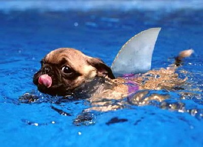 Heyheyhey, loook, I'm a shark! (via pinterest)