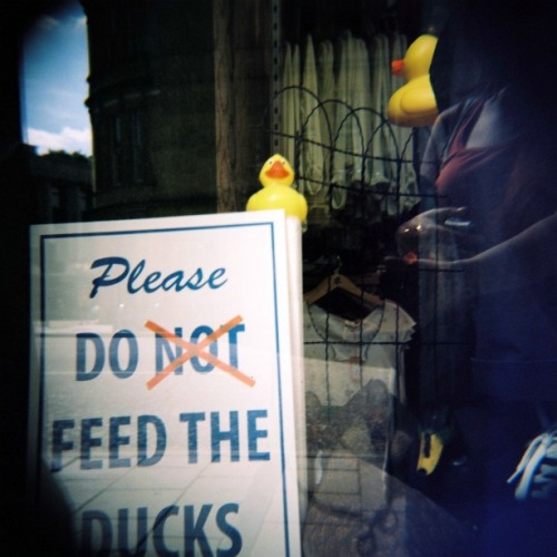 Please do feed the ducks. See in the window of a shop, Bristol, June 2011