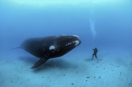 murissement:  © Brian Skerry (by ILCP)  This is the kind of diving I want to do with you!