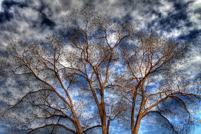 Santa Fé Sky and Tree by SmokinToast on Flickr. by chris wieck. santa fé, nuevo méxico