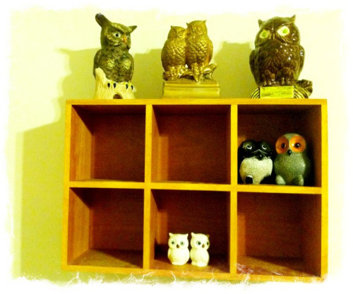 Hoot of a time. Update on owl collection.  Chicago and it's thrift stores, thank me.
