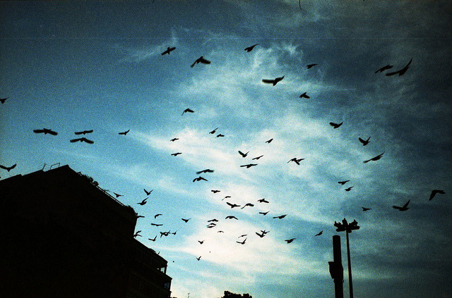 Revoada by lomocouple on Flickr.