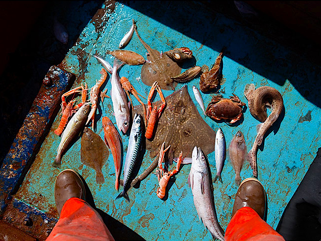 crookedindifference:  kateoplis:  A sample of the common bycatch species from an inshore prawn trawler. These are the different species of sea life caught in one three-hour tow. Corey Arnold for Ocean2012, calling for an effective reform of the EU's common fisheries policy.  Bycatch is fish caught unintentionally in a fishery while intending to catch other fish. Basically, it's the collateral damage of unselectively scooping wildlife out of our oceans while in search of one or a few commercially viable species.