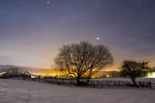 Tree with Sharp Stars by _asv_ on Flickr.