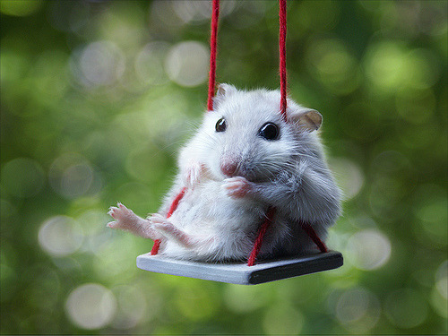 toptumbles:  Nothing big. Just a mouse on a swing.