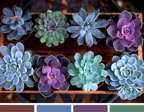 love succulents. love these colors. (found here.)