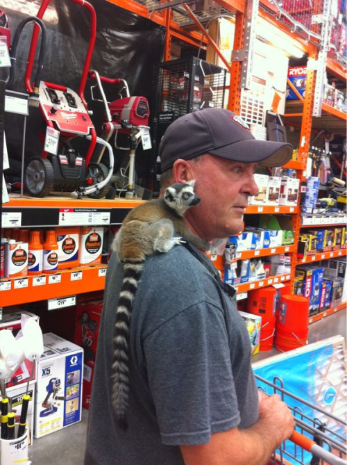 elzohan:  A guy brought his baby lemur with him in the store lol. It was squeaking and making noises. Cutest thing evarrr!  Conflicted!