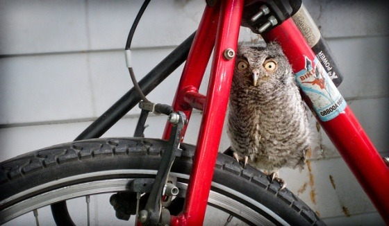 (via A Bicycle Built for Whoooooooo — Cute Overload)