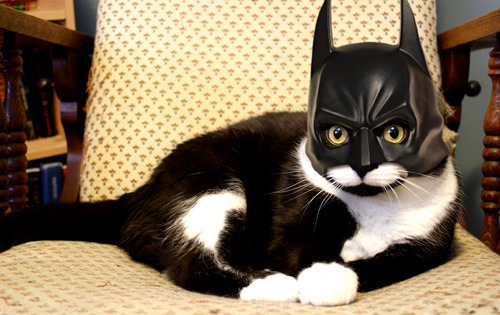 It's BATCAT. O_O