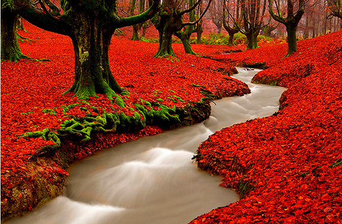sunsurfer:  Red Autumn Woods, Portugal  photo via xenabitesback