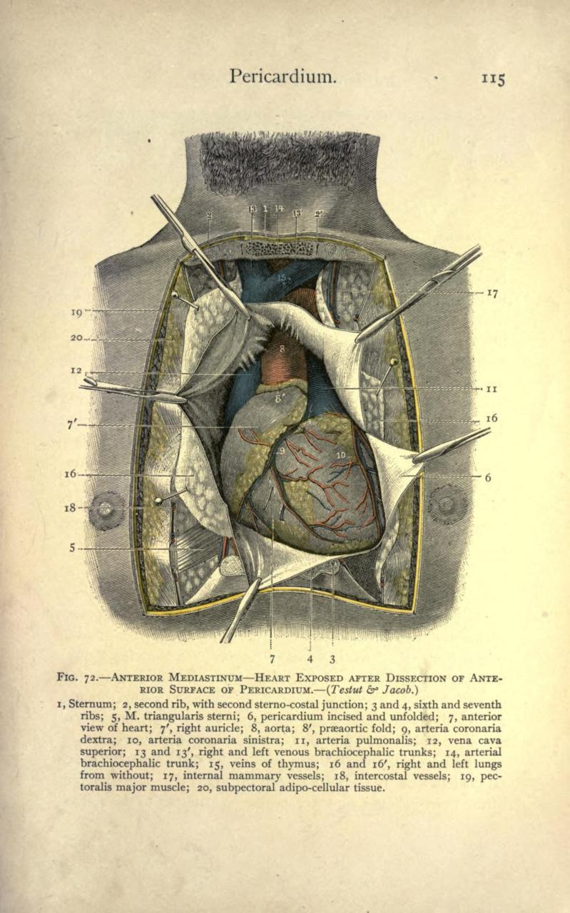 Surgical Diseases of the Chest. Carl Beck, 1907.