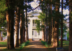 "bookmania:  Oxford, Mississippi - William Faulkner's Rowan Oak. In 1930, William Faulkner purchased what was then known as ""The Bailey Place"", a primitive Greek Revival house sitting on four acres of hardwood and cedar. Colonel Robert Sheegog, an Irish immigrant planter from Tennessee, had built the home when he settled in the tiny frontier settlement of Oxford in the 1840's. Faulkner renamed it Rowan Oak after the rowan tree, a symbol of security and peace.(Read More)"