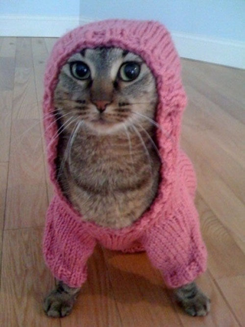 themaninthemoon:  OMG I NEED TO MAKE MY CAT THIS
