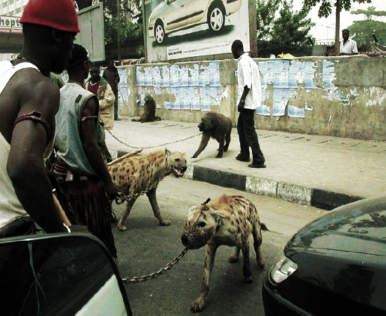 farhaaan:  Nigerians with hyenas and baboons for pets.