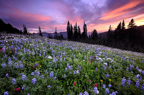 Mt. Ranier, Washington (by Dene' Miles - Iceland or bust)