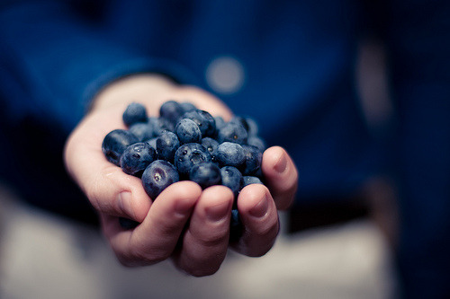 skeletales:blueberries (by davidoa.dk)