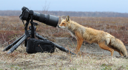 magicalnaturetour:  Photographer Shpilenok :)