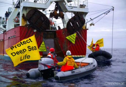 "Greenpeace activists take on bottom trawlers. But in Oman, they no longer have to.  Bottom trawlers were forced to set sail after Oman effected its ban on this destructive ""fishing"" practice. A small Gulf country that borders the United Arab Emirates, Oman is renowned for its incredible coral reefs and marine diversity. But 16 large factory fishing boats operating off shore had jeopardized the Sultanate's marine health and put many fishermen out of work.  First put in place by the Ministry of Agriculture and Fisheries in May 2009, the ban stipulated that licensed bottom trawlers would have to pack up their nets and leave the Sultanate's waters within two years. And now, their time is up. Oman is the first Gulf country to officially ban bottom trawling.  Find out more by clicking on photo or source"