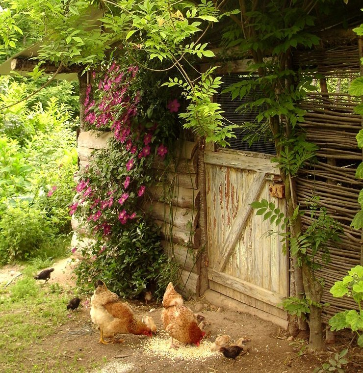 another of hardworking hippy's photos - this time of her pretty chicken shed :)