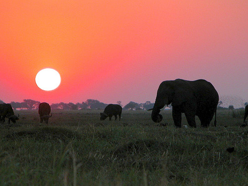 Sunset in Chobe National Park, Botswana (by IvanCheng)