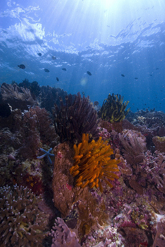 Reef top, Bunaken, North Sulawesi, Indonesia  (by Mgungen)
