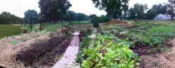 Garden panorama 6.10.11 Photosynth!