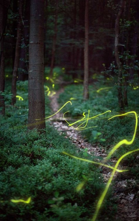 Fireflies in a forest near Erlangan, Germany (via If you glow down to the woods today… the moment fireflies turn woods into an enchanted forest | Mail Online)