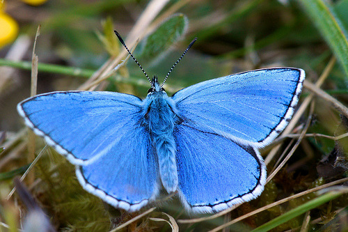 Electric Blue! (by Ian A Kirk)