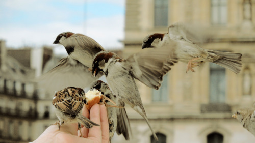 Birds love Madeleines