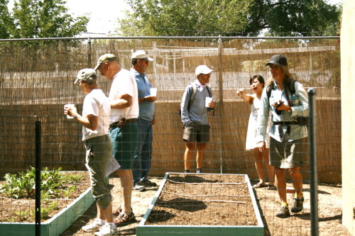 Showing off our bees, coop and garden to interested visitors on the Albuquerque Coop and Garden Tour, Saturday.