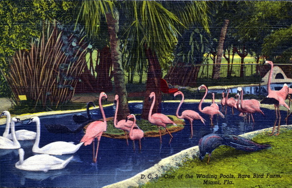 oldflorida:  Bird Wading pond- late 1940's-50