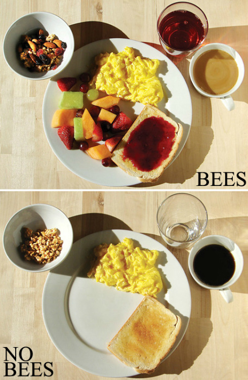 "Breakfast without Bees? ""Without honeybees, many foods included in the breakfast [on top] would become too rare for most people to afford. Shortages would affect an array of fruits, as well as jams and jellies, almonds and even milk, because dairies use alfalfa (which needs pollinators) as a protein-rich feed for dairy cows."" - ScientificAmerican.com"