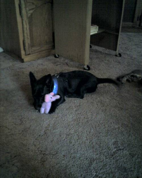 Fippy on Sept. 29, 2010— playing with a pink elephant toy.