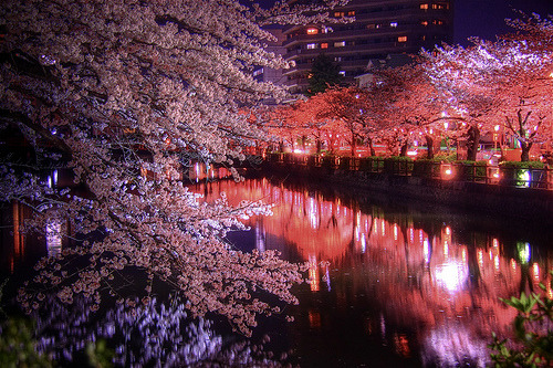 Night Sakura HDR (by shinnygogo) …Odawara Castle, Kanagawa Pref., Japan