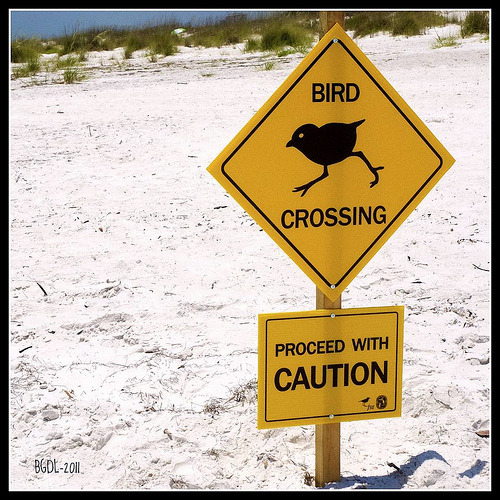 Bird Crossing