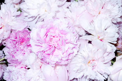 terrysdiary:  Last of the Peonies…